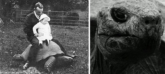 182-year-old-tortoise-jonathan-17