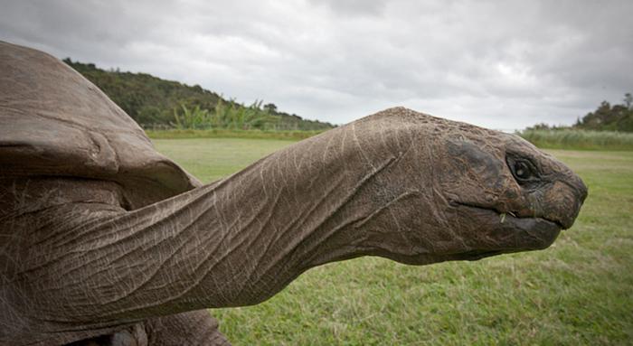 182-year-old-tortoise-jonathan-5