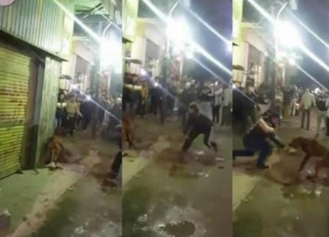 كلب شارع الهرم