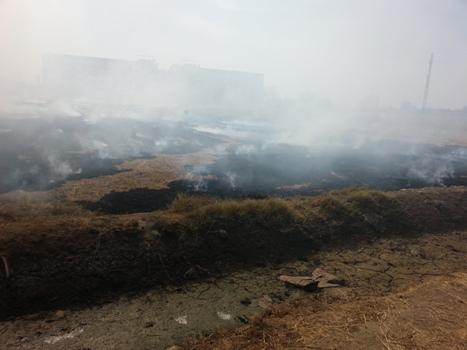 تغريم صاحب أرض زراعية بقرية دبيج 10 ألاف جنية لحرق قش الأرز