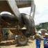 العثور على أضخم ثعبان في التاريخ بغابات الأمازون