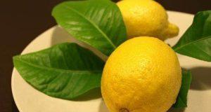 ثمرة الليمون