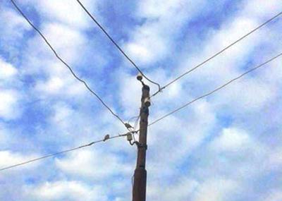 22016719746647تهالك-الأسلاك-وأعمدة-الكهرباء-(5)