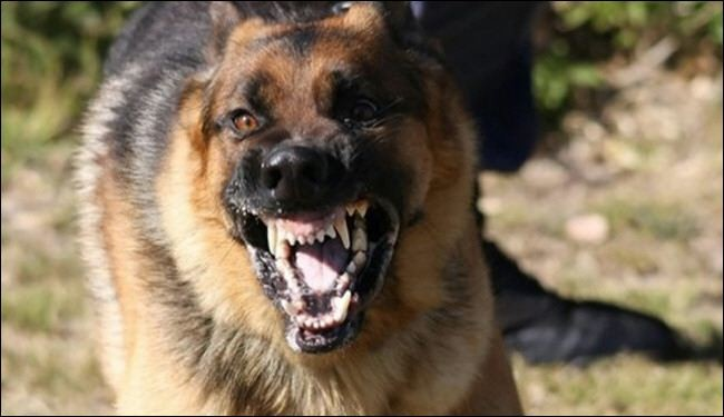 رفع مواطن أميركي عضه كلب مسعور، دعوى قضائية يطلب فيها تعويضه بمبلغ يساوي 2 وأمامه 36 صفرا
