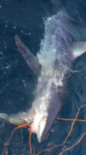 القرش (2)