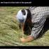 بالفيديو.. مزارع يعثر على ما لم يخطر بباله فى حفرة