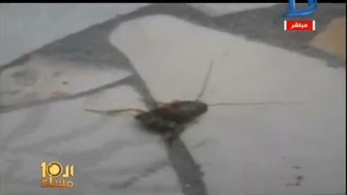 تتقيأ حشرة بالشرقية