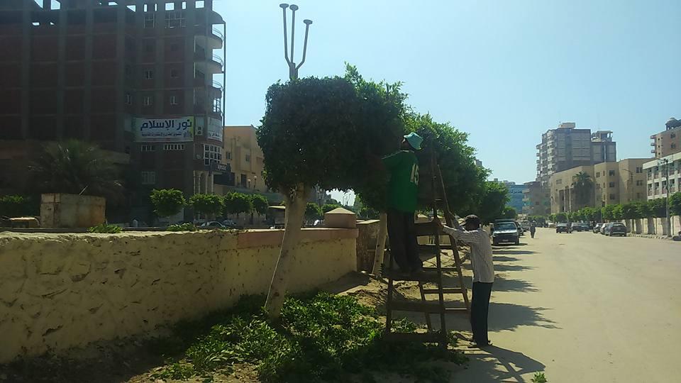 نظافة وتجميل بمدينة فاقوس3