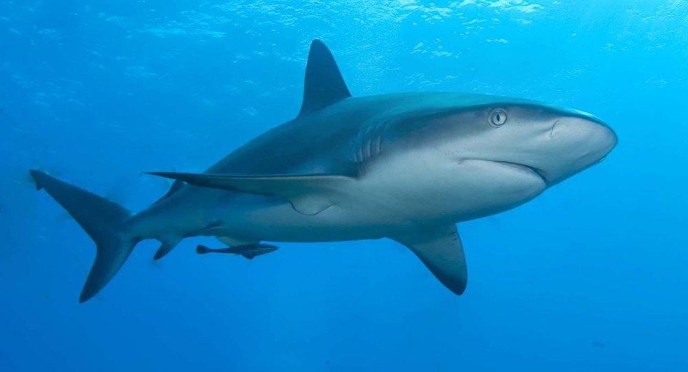 ظهور أسماك القرش بالقرب من سواحل البحر الأحمر 1