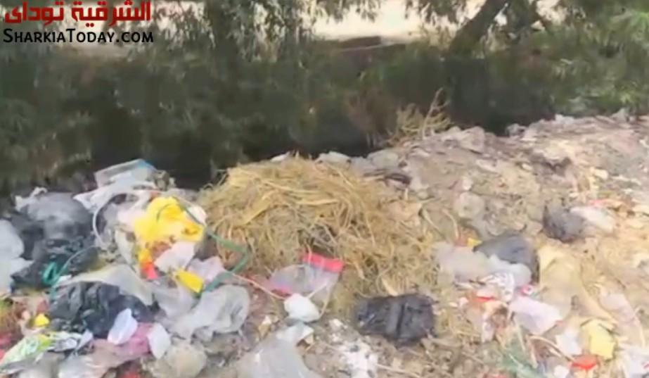 .. معاناة قرية «البساتين» ببلبيس من تلات القمامة وتفشي الأمراض 1