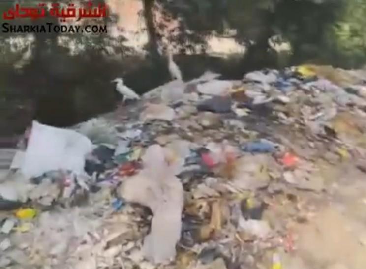.. معاناة قرية «البساتين» ببلبيس من تلات القمامة وتفشي الأمراض 2