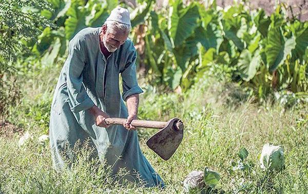 الذكي للفلاحين بالشرقية للحصول على المستلزمات الزراعية