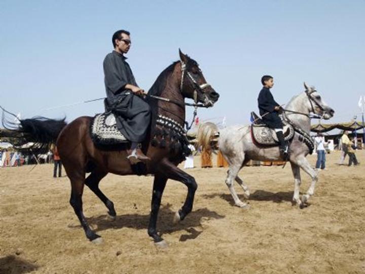 تستعد لانطلاق مهرجان الخيول العربية في هذا الموعد