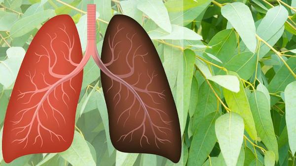 أفضل 8 أعشاب لصحة الرئتين