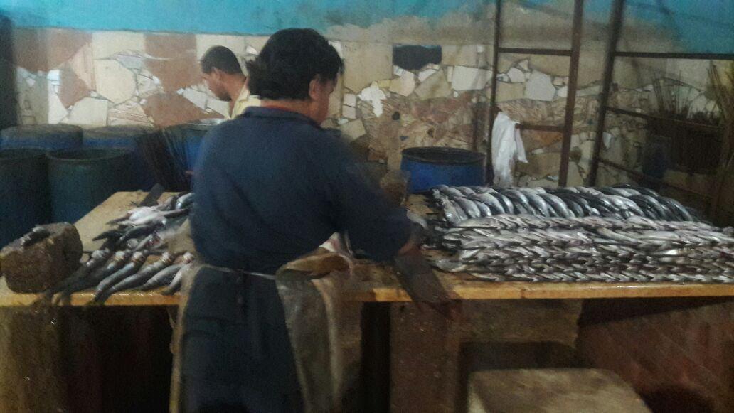 الشرقية يضبط 4 طن أسماك مجهولة المصدر بفاقوس 4