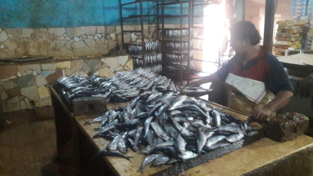 الشرقية يضبط 4 طن أسماك مجهولة المصدر بفاقوس 5