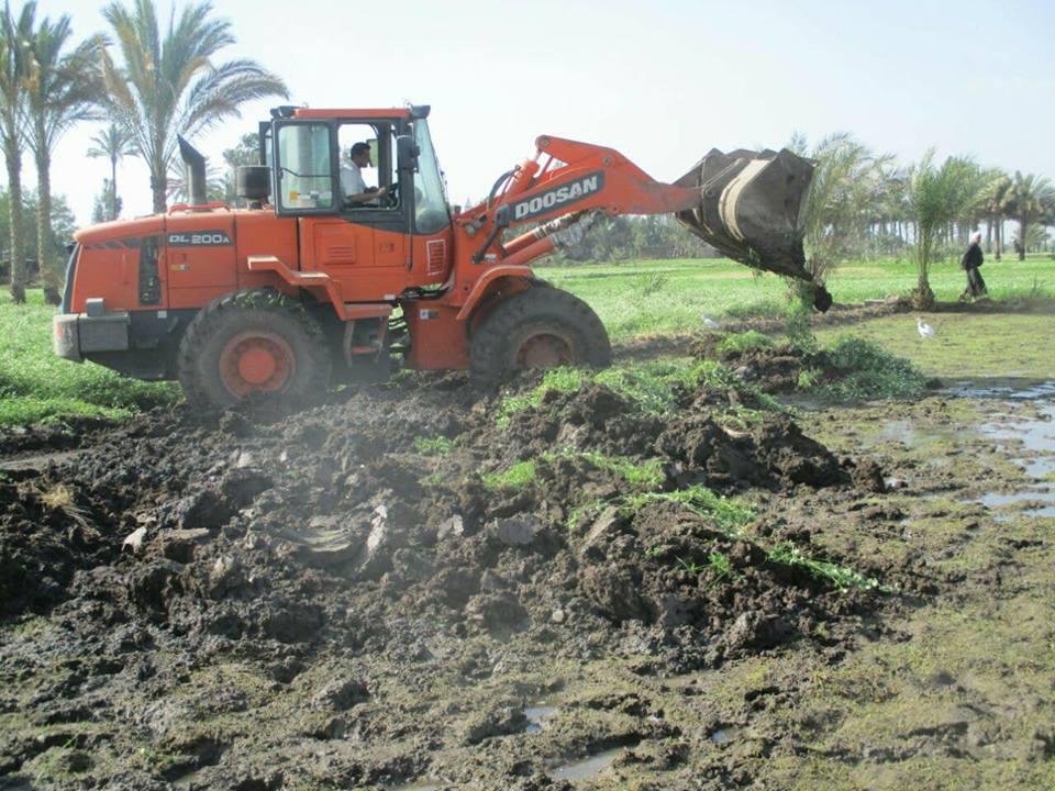 إزالة 51 فدان أرز بالشرقية