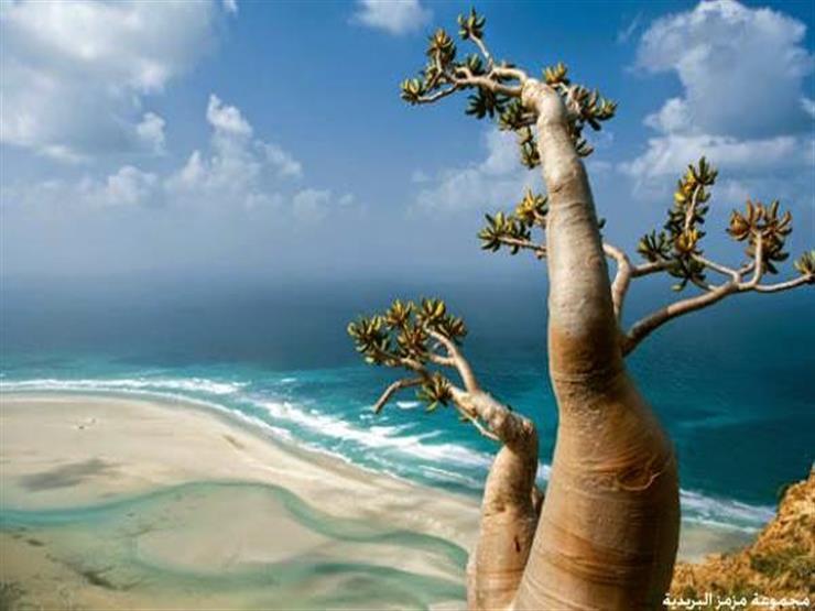 الإمارات تصدر بيام بشأن جزيرة سقطرى