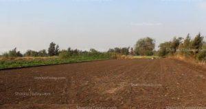 حظر زراعة الأرز بمحافظة الشرقية