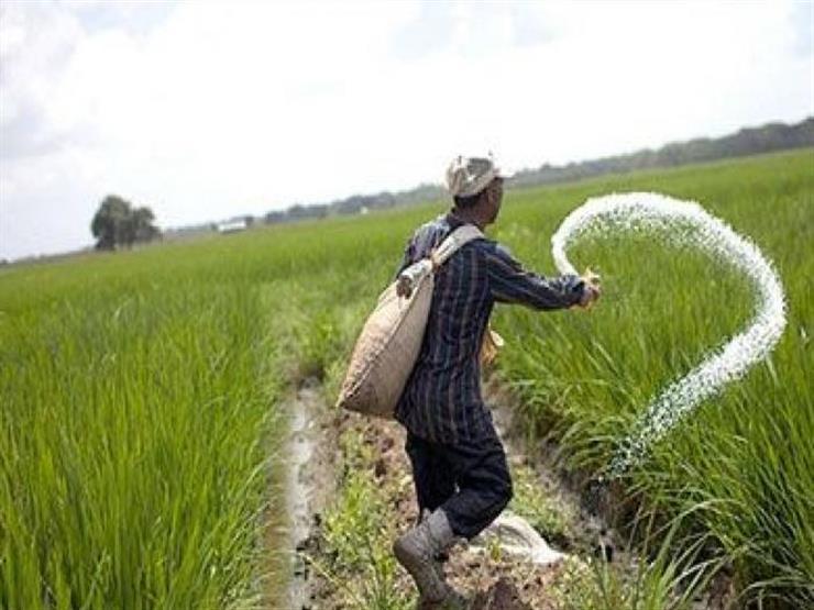 الزراعة تعلن رفع أسعار الأسمدة