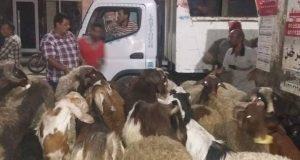رئيس حي ثان الزقازيق يتحفظ على 12 خروف