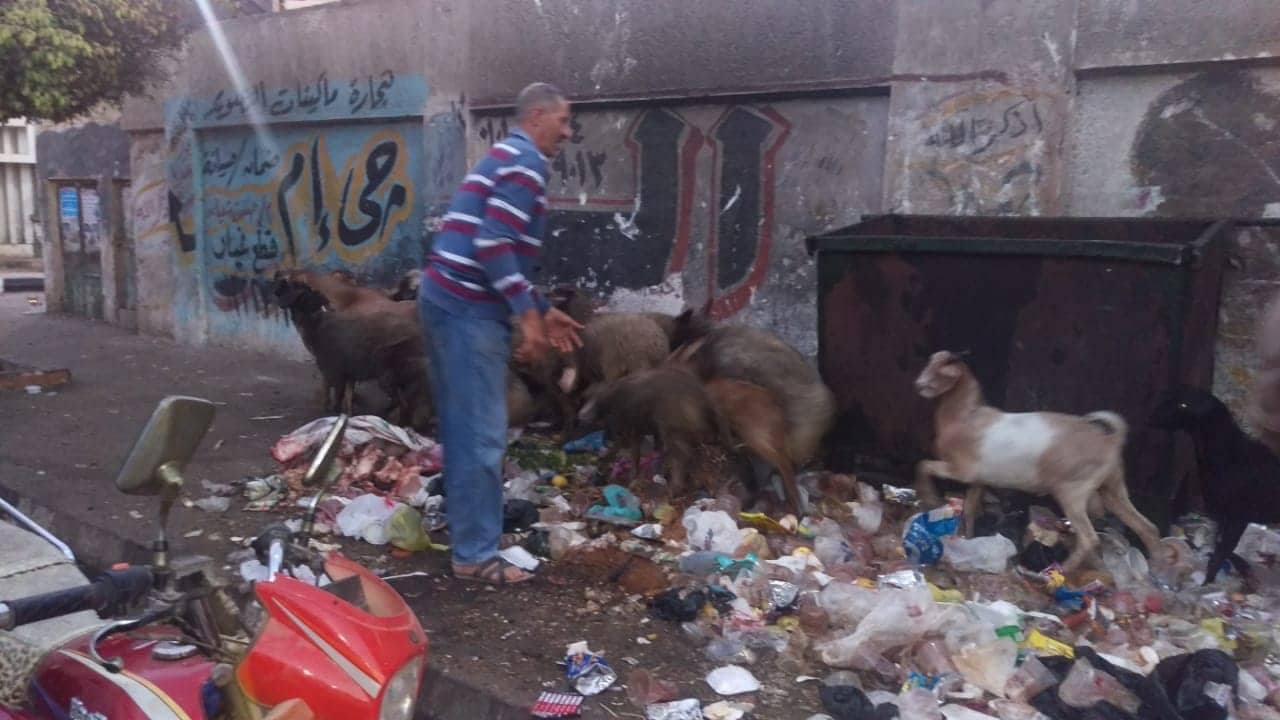 ضبط عربات كارو وخرفان في حملة لنظافة الشوارع بالزقازيق
