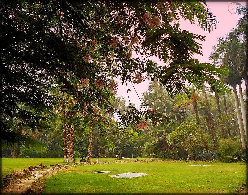 حديقة القصر