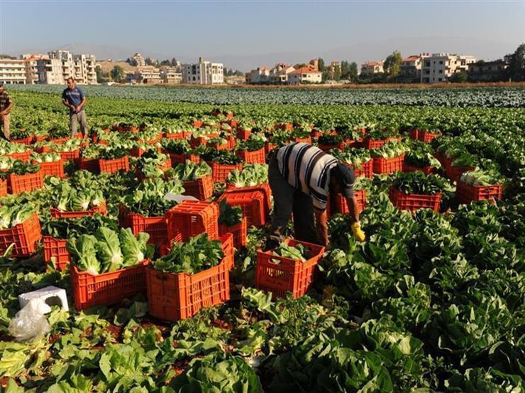 حقيقة حظر 7 دول استيراد محاصيل زراعية