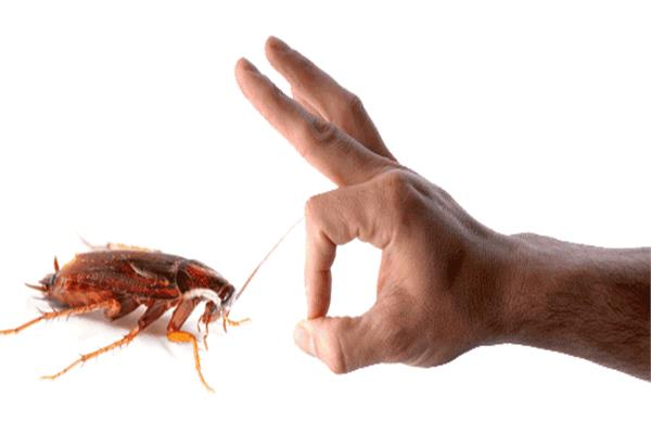 طرق فعالة للتخلص من «صراصير المطبخ»