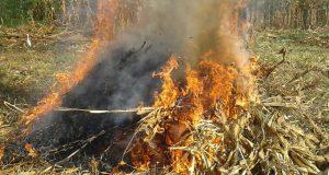 بيئة الشرقية تحرر 187 محضر للمزارعين
