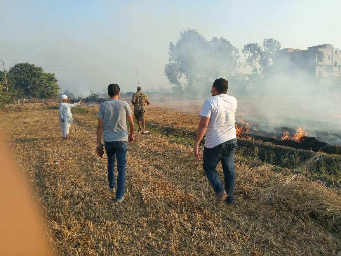 شئون البيئة بالشرقية يتصدى لظاهرة الحرق المكشوف للمخلفات الزراعية5