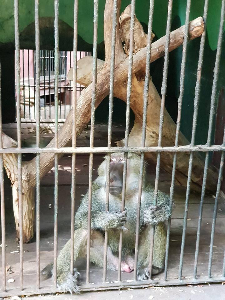 المتحف الحيواني
