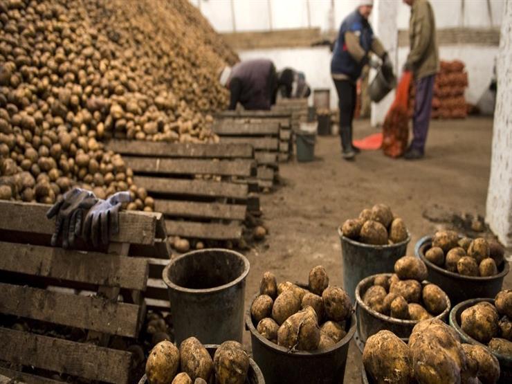 الزراعة تعلن ضبط 3400 طن بطاطس مخزنة