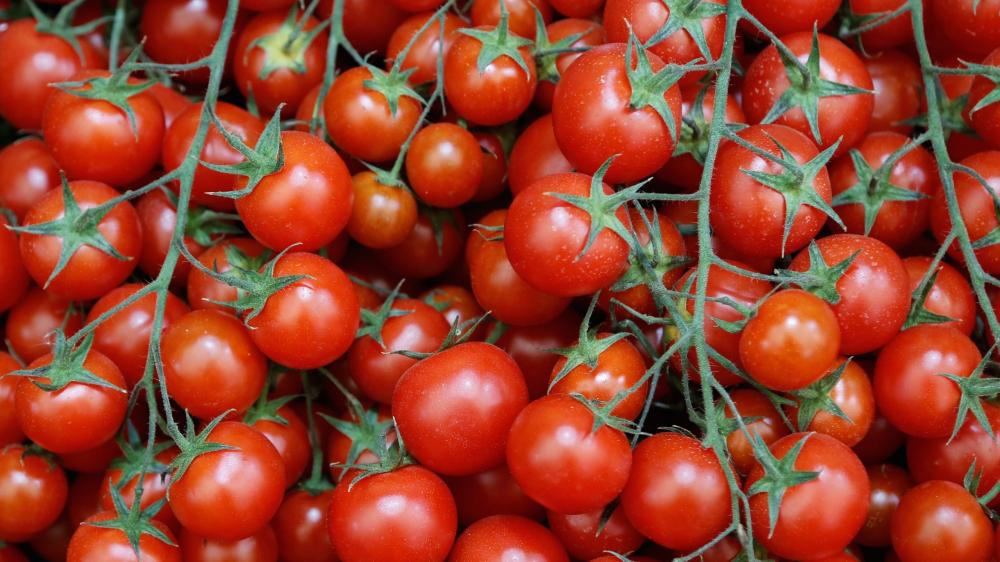 الزراعة تكشف سبب ارتفاع أسعار الطماطم