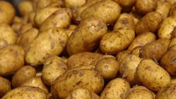 الزراعة ضخ 15 طن بطاطس بالمجمعات بسعر 6 جنيه