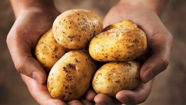 جمعية منتجي البطاطس تراجع سعرها إلى 7 جنيهات ونصف