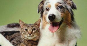 القطط والكلاب