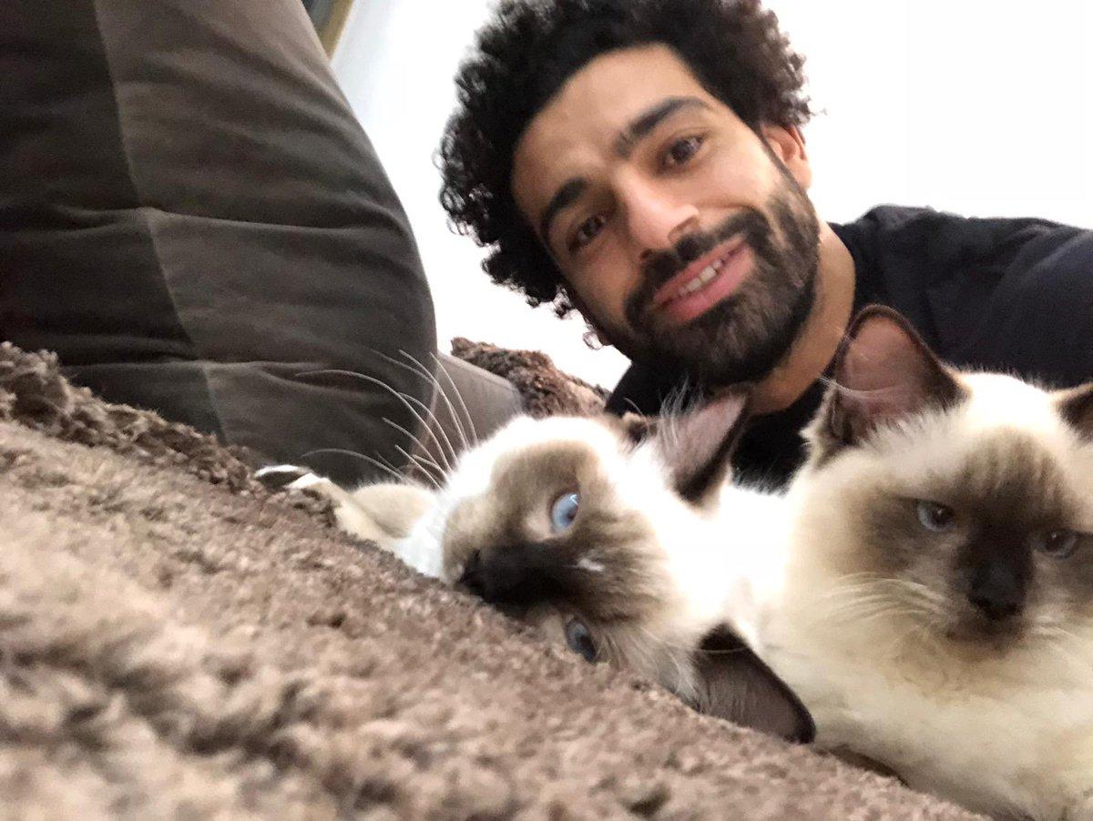 محمد صلاح يعلق على تصدير الكلاب والقطط من مصر