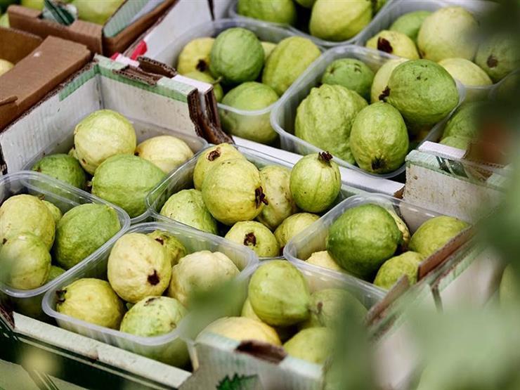 السعودية تحذر من فرض حظر استيراد الجوافة المصرية