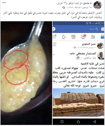 حقيقة انتشار الدود في العدس المصري