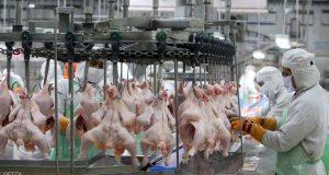 العلم يحذر من الخطأ الفادح قبل طهي الدجاج