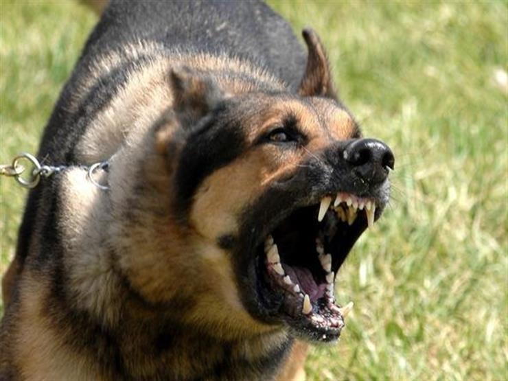 كلب ضال يعقر طفل في أحد شوارع الشرقية