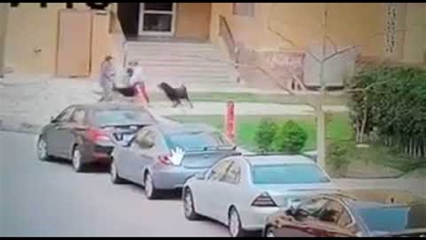 تعليق اتحاد الرفق بالحيوان على واقعة كلاب مدينتي