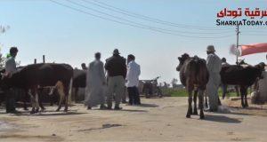 جامعة الزقازيق تنظم قافلة بيطرية في أفقر قرية بالشرقية