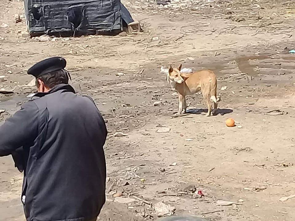 مدينة أبوحماد يقضي على 24 كلب 1