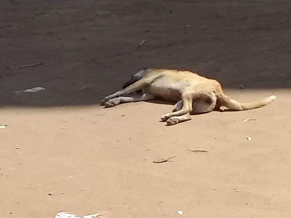 مدينة أبوحماد يقضي على 24 كلب 2