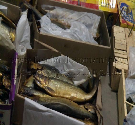 ضبط 126 طن أسماك مملحة بالشرقية غير صالحة للاستهلاك الآدمي