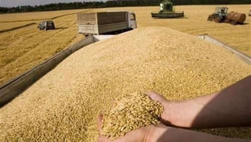 محافظ الشرقية انتظام توريد القمح لصوامع المحافظة