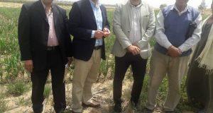 نائب رئيس جامعة الزقازيق يزور مزرعة الخطارة بفاقوس