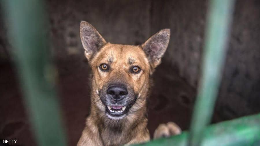 أمريكا تمنع استيراد الكلاب من مصر